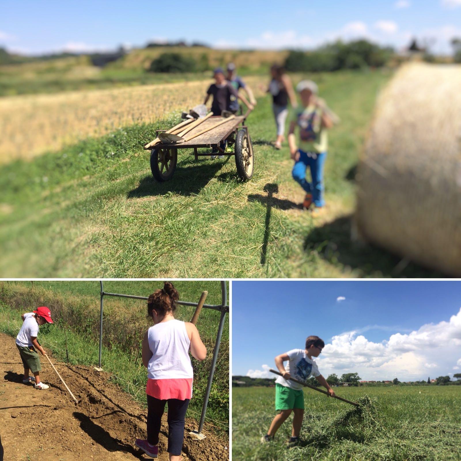 attività estive in fattoria